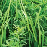 grass-alfalfa