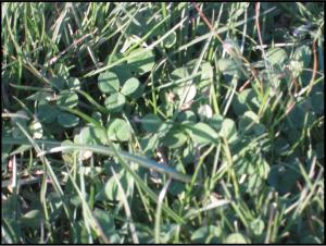 frost-seeding